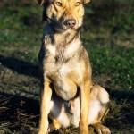 Dogo (2)