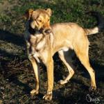 Dogo (4)