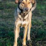 Dogo (5)