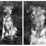 Dogo (6)