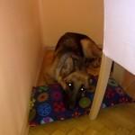 Lea (2)