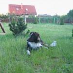 Remi (8)