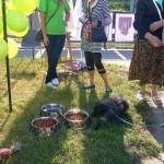 Solidarni ze zwierzętami 24-08-2013 (39)