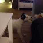 Luna w nowym domu (1)
