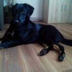 Bruno w nowym domu (1)