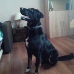 Bruno w nowym domu (2)
