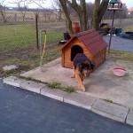 Franek w nowym domu  (5)