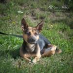 Gucio (Feniks) w nowym domu 08-04-2015 (1)