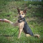 Gucio (Feniks) w nowym domu 08-04-2015 (4)