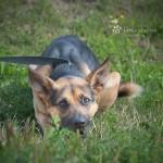 Gucio (Feniks) w nowym domu 08-04-2015 (6)