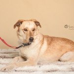 Rufio (5)