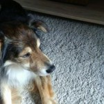 Tufi (Tofi) w nowym domu) (4)