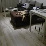 Ami w nowym domu (4)