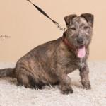 Rufus (3)
