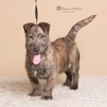 Rufus (4)