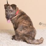 Rufus (5)