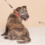 Rufus (7)