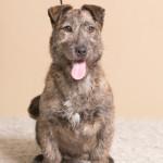 Rufus (8)