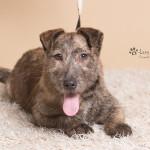 Rufus (9)