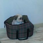 Pina w nowym domu (1)