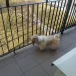 Pina w nowym domu (2)