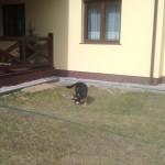 As obecnie Gacuś w nowym domu (20)