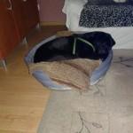 Guffi w nowym domu (4)