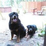 Max w nowym domu (2)