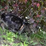 A my mamy koty II (19)
