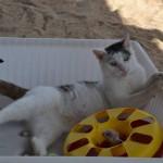 A my mamy koty II (34)