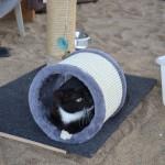 A my mamy koty II (5)