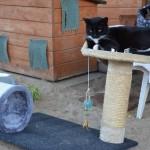 A my mamy koty II (8)