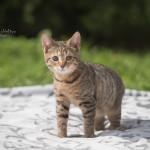 Sabina (6)