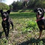 Dori i Maja w nowym domu (2)