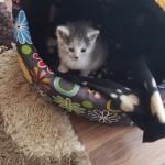 Lea w nowym domu (1)