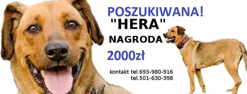 hera2
