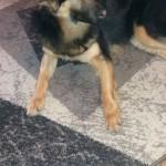 Zoja (4)