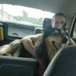 Lassie w nowym domu (3)