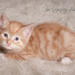 Rudy (3)