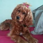 Niunia (2)