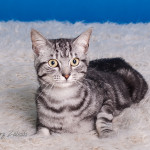Tricat (1)