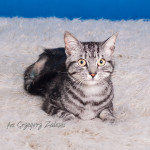 Tricat (2)