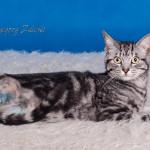 Tricat (3)