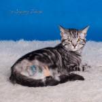 Tricat (4)