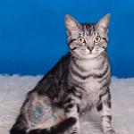 Tricat (5)