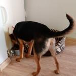 Nitka w nowym domu (2)