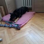 Stefa w nowym domu (2)