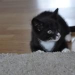 Zoja w nowym domu (2)