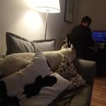 dakota w nowym domu (9)