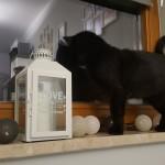 Tajga w nowym domu (4)